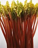 Many Stalks of Rhubarb