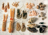Still Life of Assorted Crustaceans and Shellfish