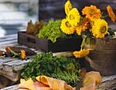 Fresh Cut Purslane on a Table; Mums in a Pot
