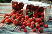 Strawberries Spilling Out of a Basket