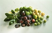 Still Life of Yellow Green and Purple Plums