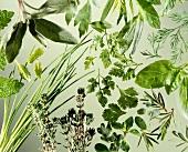 Still Life of Assorted Herbs