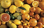 Viele Zitrusfrüchte: Orangen,Mandarinen,Zitronen,Limonen u.a.