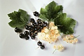 Black and White Currants with Leaves