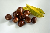 Many Sweet Chestnuts with Leaves