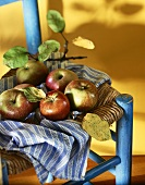 Assorted Apples Resting on a Cloth; On a Chair