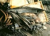 Salmon and Haddock; Coley and Mackerel; Still Life
