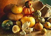 Still Life of Several Assorted Squash and Pumpkins
