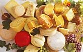 Stillleben mit vielen verschiedenen Käsesorten aus ganz Europa