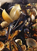 Mussels and clams in wine stock