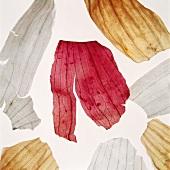 Zwiebelschalen von roter, weisser & Gemüsezwiebel