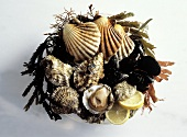 Assorted Shellfish in a Bowl; Seaweed