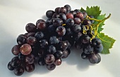 Bunch of Purple Grapes with Leaf