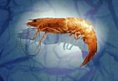 A Single Jumbo Shrimp