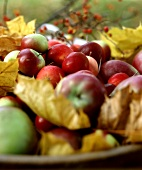 Many Assorted Apples and Colorful Fall Leaves