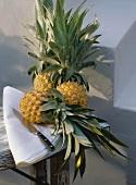 Drei Ananas & ein Messer auf Tuch auf Holztisch