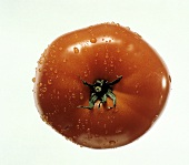 Fresh Tomato with Water Drops from Overhead