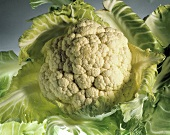 One Head of Cauliflower with Leaves