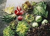 Several Assorted Types of Lettuce