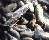 Frozen Dates in a Plastic Bag