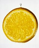 Zitronenscheibe mit einem Tropfen