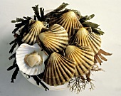 Scallops in a Shell; Plate with Seaweed