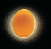 Glowing Brown Egg