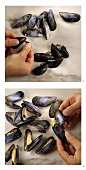 Mussels: tearing off the beards and opening the shells