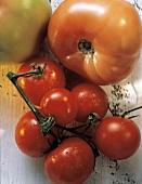 Fresh Cherry Tomatoes on Vine; Salad Tomatoes