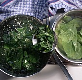 Blanching spinach (boil briefly & refresh in cold water)