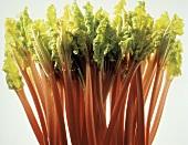 Many Rhubarb Stalks
