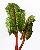 Red Leaf Chard