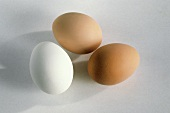 One White Egg with Two Brown Eggs