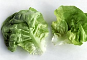 Two Leaves of Bib Lettuce