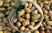 Potatoes in a Burlap Sack; Overhead