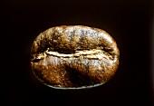 Eine einzelne Kaffeebohne auf schwarzem Hintergrund