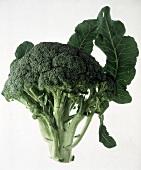 A Single Broccoli Crown
