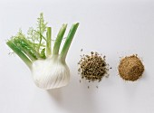 Assorted Stages of Fennel