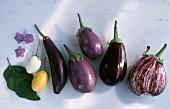 Sechs verschiedene Auberginensorten