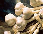 Fresh Garlic Bulbs