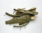 Pine bark on white background