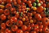 Assorted Tomato Varieties