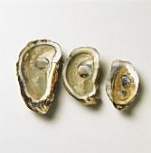 Drei Austern: Cape Neddick, Cape Cod & Virginia