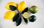 Fresh Lemons and Limes; Leaves