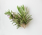 Sprigs of rosemary, one with & two without flowers