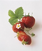 Fresh Strawberries with Leaves and Flower