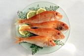 Four red mullet with dill & lemon on glass plate