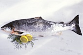 A wild salmon with lemon slices, dill on marble background