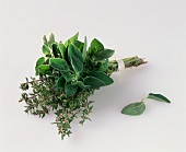 Herb bouquet with oregano and thyme