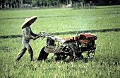 Man Plowing in a Rice Field